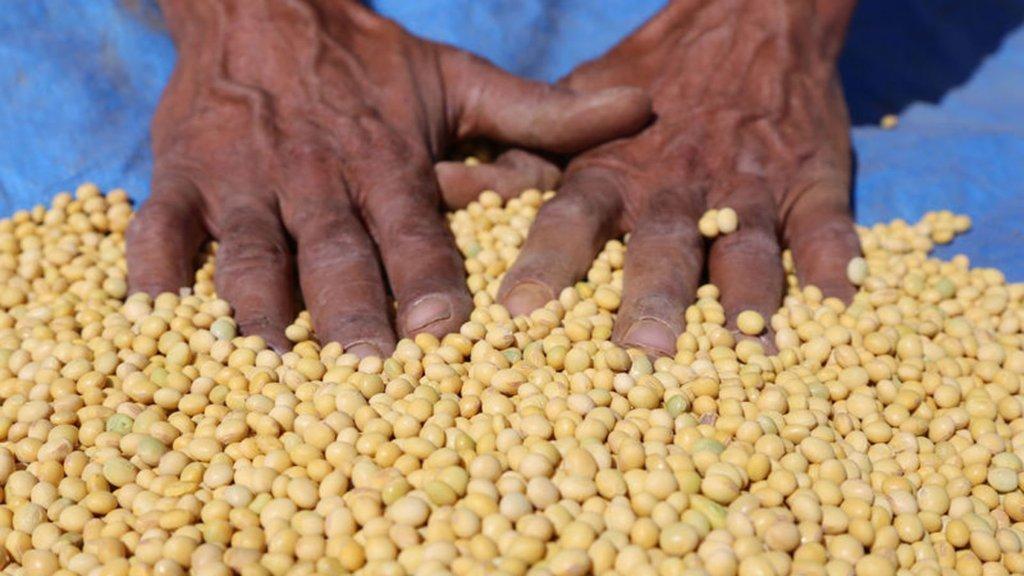 GDO'suz milli tohum toprakla buluşuyor