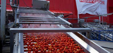 Assan Gıda sezonun ilk domatesini karşıladı