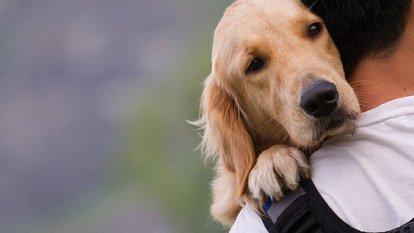 İşte köpeklerin dost canlısı olmasının nedeni...