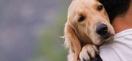 Köpeklerin dost canlılığının nedeni genetik değişiklik olabilir