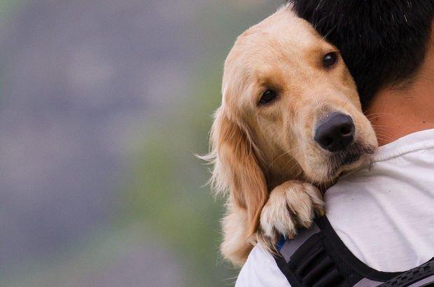 Dost canlısı köpekler