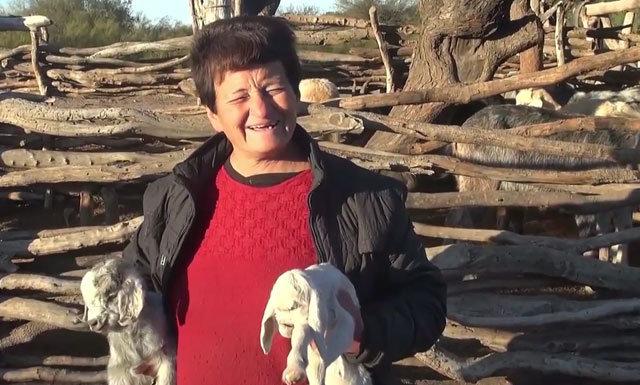 Yedi doğan keçinin görünüşü hayret ettirdi