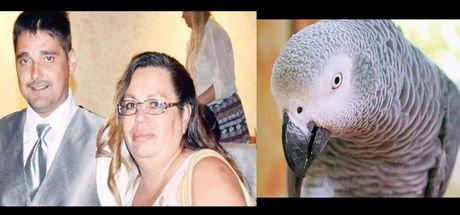 Papağanın tanıklığı hapse götürdü