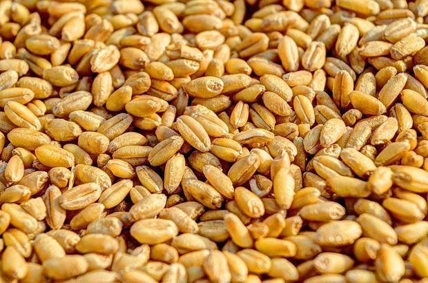Milyarca liralık buğday israf ediliyor