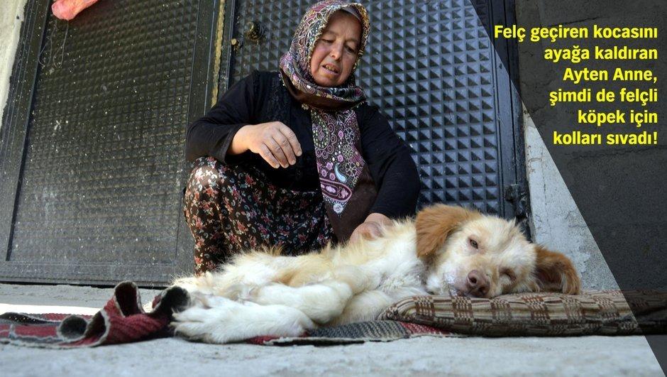 Zonguldak Ayten Oktay felçli köpek