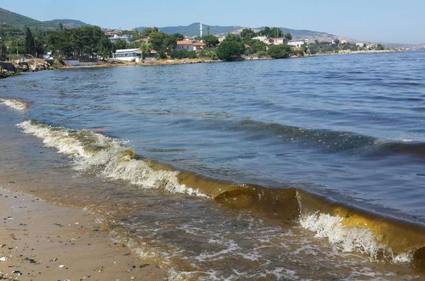Alg patlaması Erdek sahillerini kahverengiye boyadı