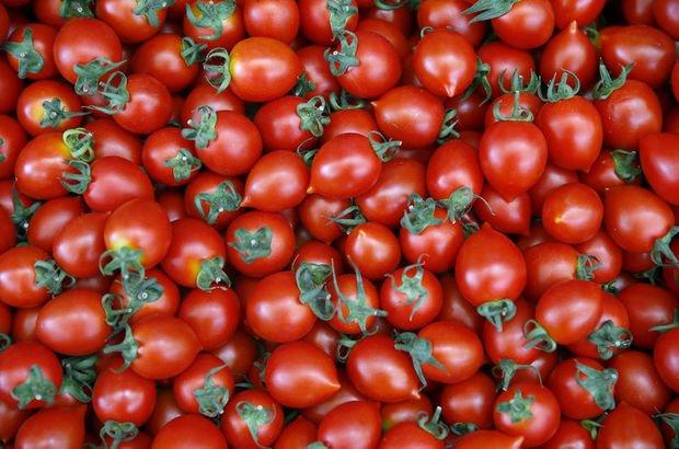 domates, domates yasağı Rusya
