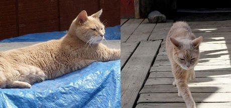 Alaska'nın kedi belediye başkanı hayatını kaybetti