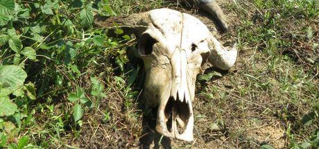 Hayvan hırsızları Şileli köylülerin kâbusu oldu