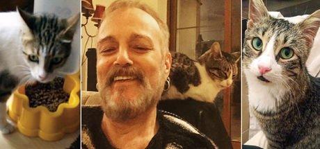 Harun Kolçak'ın kedilerine sahip aranıyor