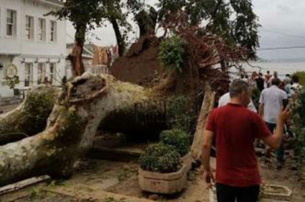 Çınaraltı'nda tarihi anıt çınar devrildi