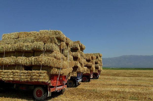 Ardahan'da samanların kilosu 55 kuruş ila 60 kuruş arasında satılıyor