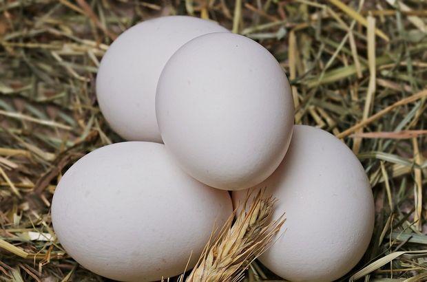 Yumurtadaki yükseliş üreticisini