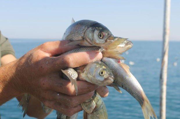 Van Gölü balık