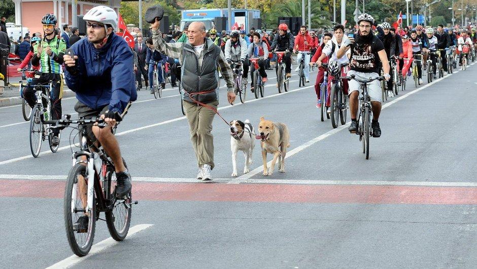 İstanbul Bisiklet Derneği İBB Fatih Ordu Caddesi bisiklet yolu