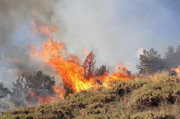 Erzurum'da orman yangını! Belediye halktan yardım istiyor