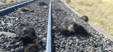 Elazığ'da trenin çarptığı sürüdeki 90 keçi öldü