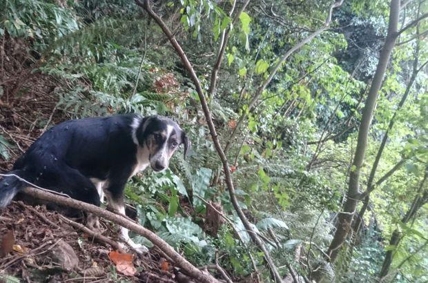 Tel ile bağlanıp işkence edilen köpek kurtarıldı