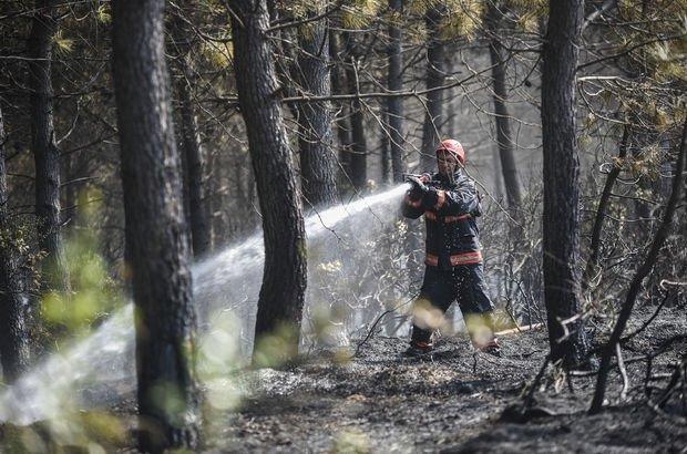 Sarıyer Rumeli Feneri'ndeki ormanlık alanda yangın