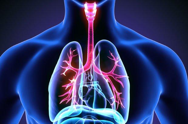 Sigarayı bırakınca vücutta neler oluyor? Sigaranın zararları nelerdir?