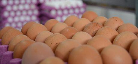 Böcek ilaçlı yumurtalara AB ülkelerinden sonra Macaristan'da da rastlandı