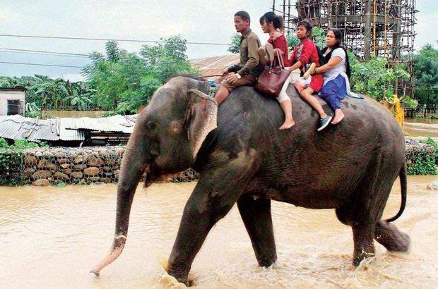 Nepal'de filler turistleri kurtardı