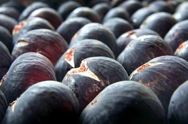 siyah incir