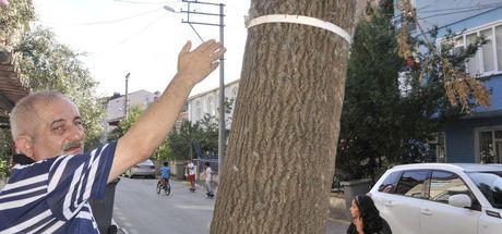 Kocaeli'de bir sokağı tırtıllar bastı