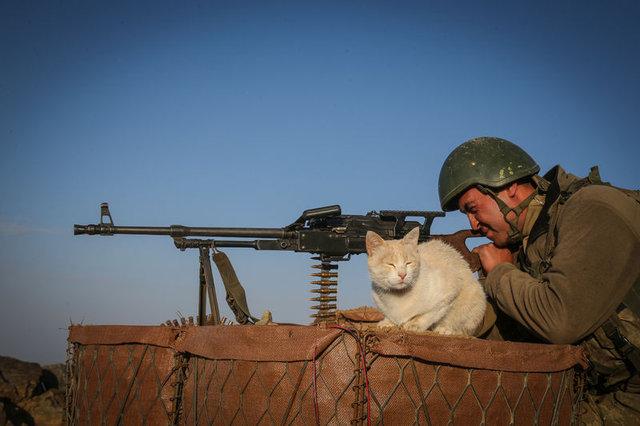 """Mağarada bulunan kediler Mehmetçiğin """"can dostu"""" oldu"""
