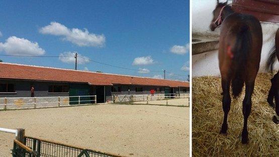 Kurtlar köye indi, milyonluk atlar telef oldu