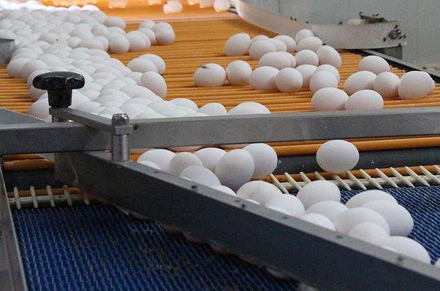 İtalya'da da yumurtada zehirli böcek ilacına rastlandı