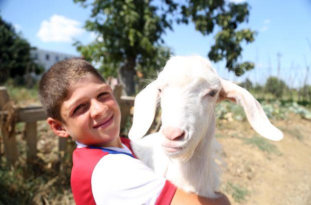 Çocuk ile yavru keçinin dostluğu