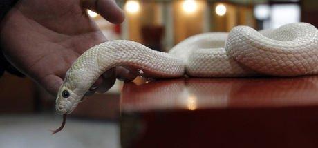 Yılanlara karşı panzehir kalmadı