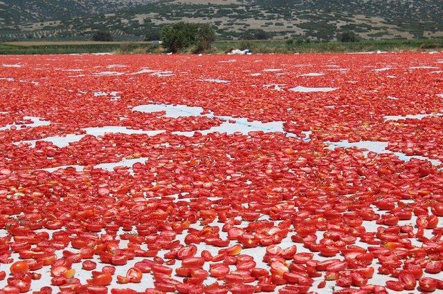 Ege'nin kuru domatesi İtalyan sofralarını süslüyor
