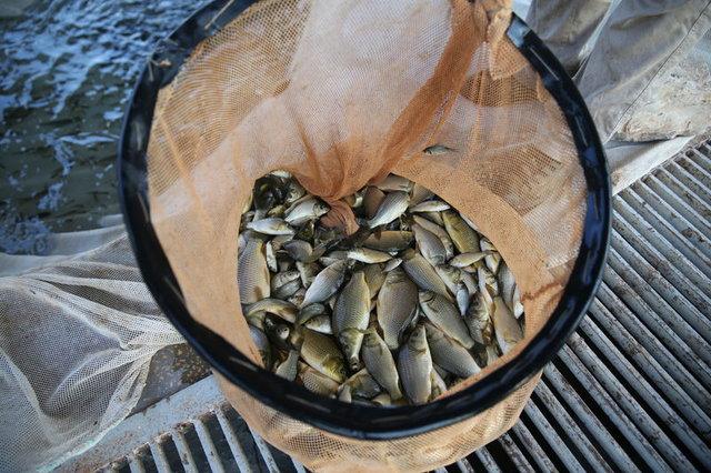 Atatürk Barajı'da balık üretiminde rekor bekleniyor