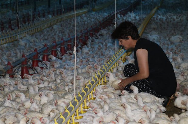 girişimci kadınlar, tavuk çiftliği