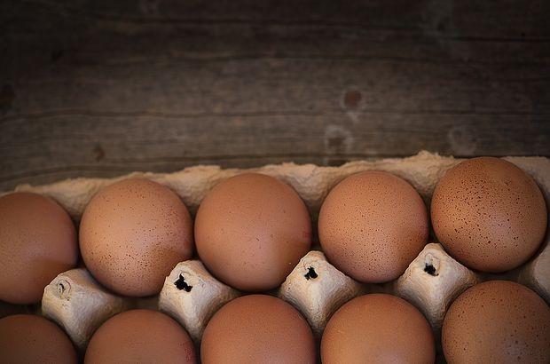 yumurta, fipronilli yumurta, zehirli yumurta