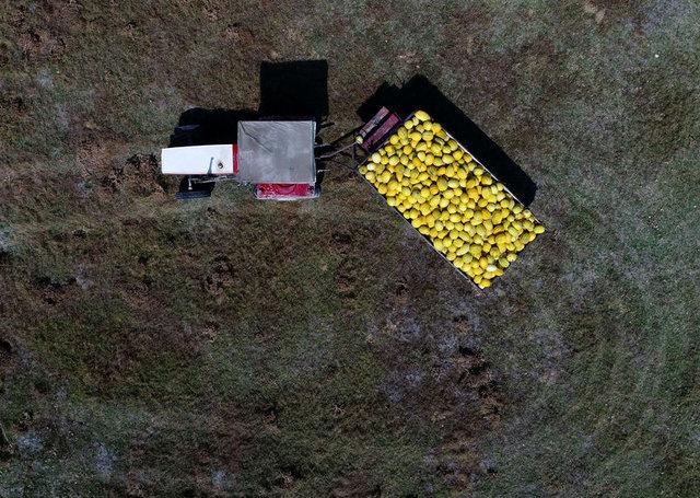 Tescilli Kırkağaç kavunu dış pazara açılıyor