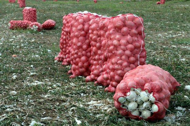 soğan, soğan fiyatları, soğan üreticisi