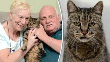 Dünyanın en yaşlı kedisi 144 yaşında öldü