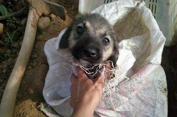 Antalya'da yavru köpeği çuvala koyup ölüme terk ettiler