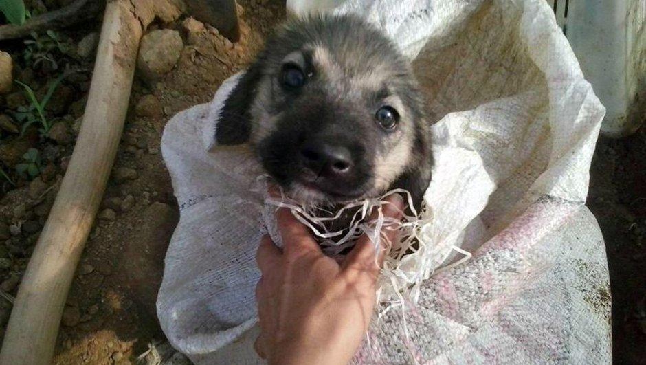 Antalya yavru köpek