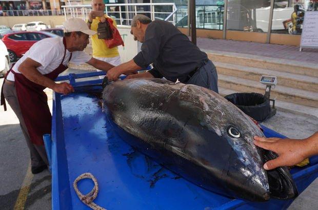 Gelibolu Granyöz balığı