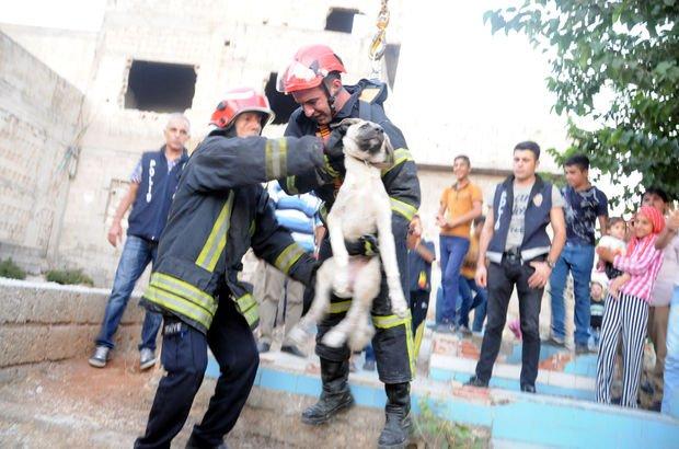 Gaziantep'te köpeğe akılalmaz işkence