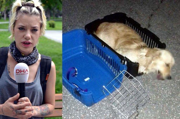 Zorla otobüs bagajına konulduğu iddia edilen köpek öldü