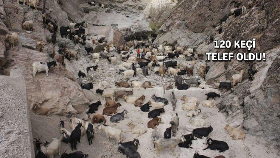 keçi sürüsü