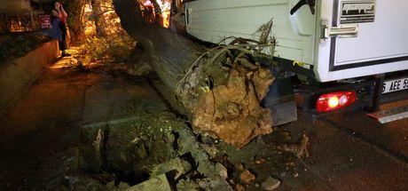 Başkent'te faciadan dönüldü: Kökünden kopan dev ağaç yola devrildi