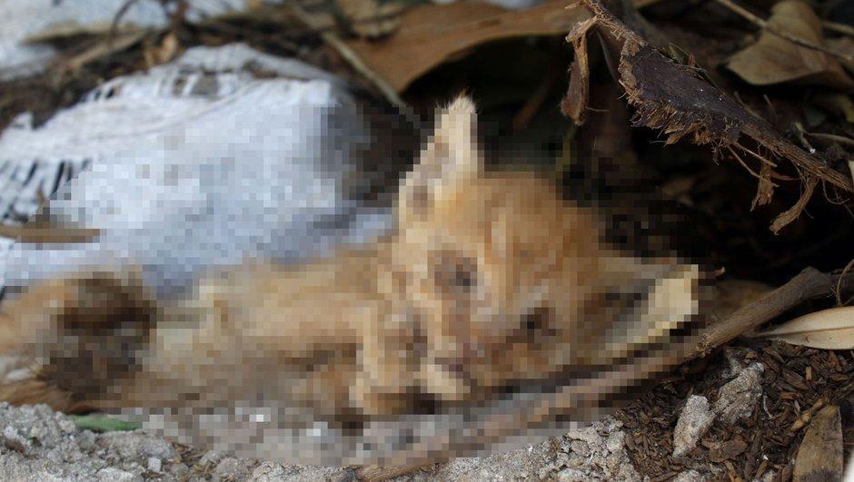 Antalya Muratpaşa yavru kedi