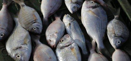 Balık ye mutlu ol