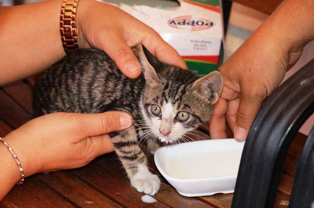 yavru kedi antalya
